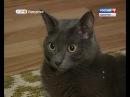 В Ижевске обнаружен умный кот Моня the clever cat is found