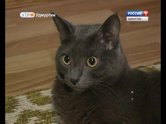 В Ижевске обнаружен умный кот Моня. the clever cat is found