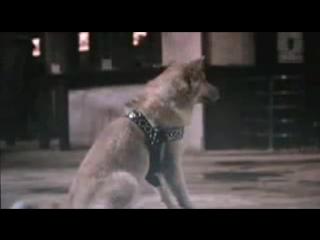 История Хатико/Hachikô monogatari (1987) Фан-ролик
