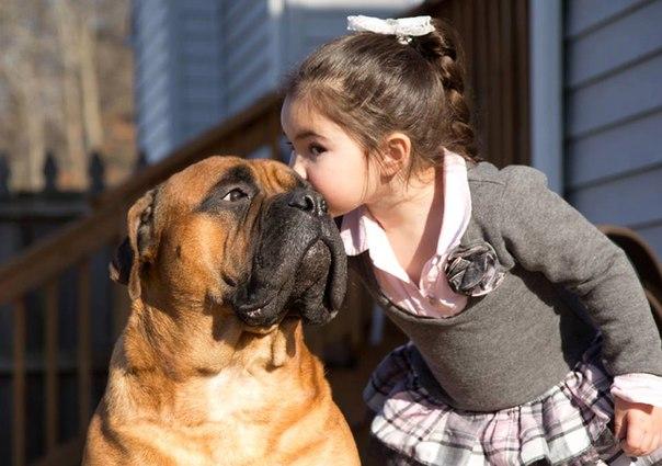 Взаимотношения, общение с собакой ONOa0ZdVtEI