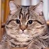 Tsar Kot