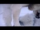 Топ Гир - спецвыпуск на Северном Полюсе режиссёрская версия