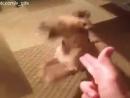 собака жжет