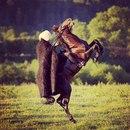 Фото Shahin Azimov №16