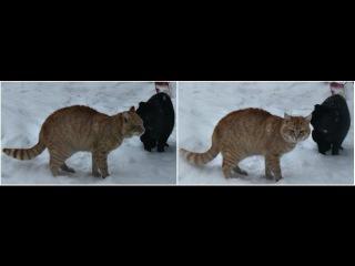 Битва гладиаторов или котячая бойня во дворе (Gladiators Battle or cat fight in the yard)