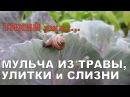 УЖАС 🐌 УЛИТКИ И СЛИЗНИ АТАКОВАЛИ 🐌 МУЛЬЧА ИЗ ТРАВЫ И ХВОИ СРАВНЕНИЕ Mulch and slugs