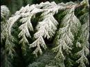 В городском саду падал снег Михаил Круг (автор Н.Бурлакова)