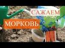 Морковь Еще один удачный способ посадки 27 05 16