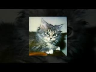 Почему коты и кошки любят валерьянку Почему коты балдеют от валерьянки