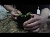 Кормление плотоядных растений.