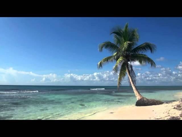 Тропический пляж с голубым небом, белым песком и пальмой.