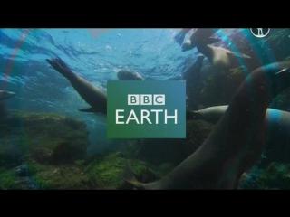 BBC: Пингвины. Шпион в стае 1 Путешествие (2013)