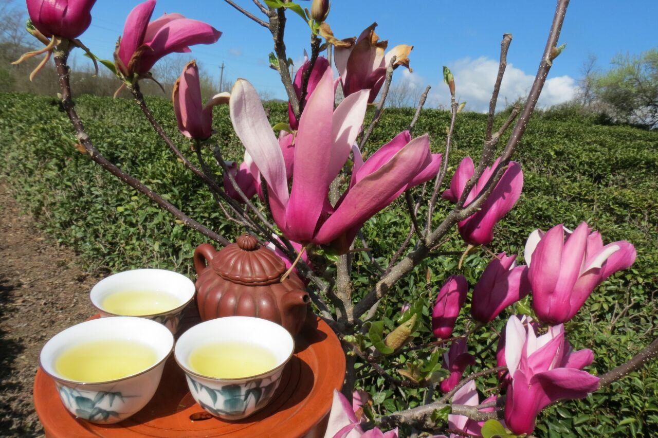 Афиша Владивосток Чай из Сочи сделанный вручную дегустация