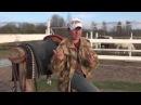 Покупка первой лошади Жеребёнок или взрослая и почему