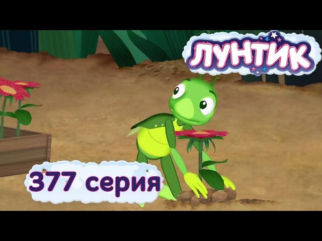 Лунтик и его друзья - 377 серия. Чья поляна?