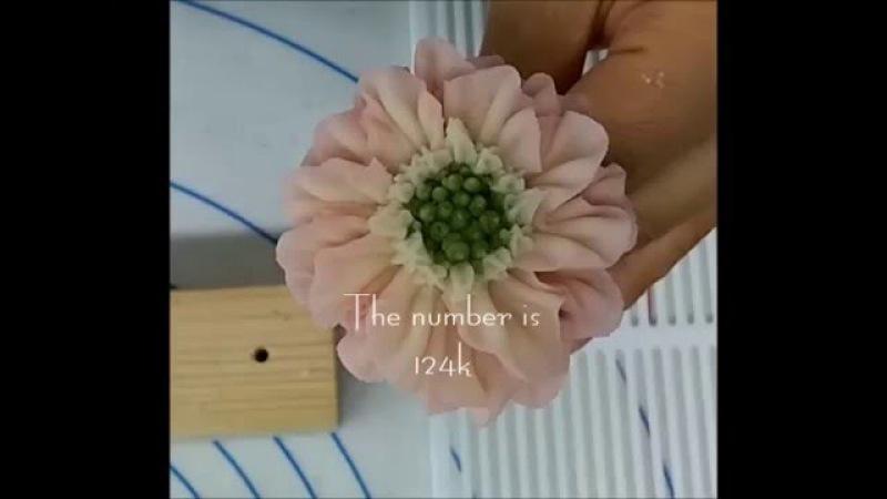 앙금플라워 독학 꽃짜기 스카비오사 The flower is a Scabiosa