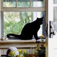 homeofcat