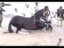 лошадь танцует под лезгинку