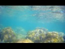 Под водой с камерой (Черное море, Ялта, Симеиз)/ Underwater (Black sea, Yalta)