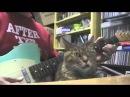 Прикол! Кот и гитара