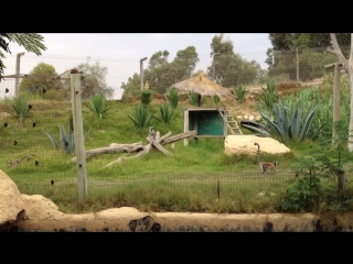 Зоопарк в Тунисе. Лемуры. 🐼