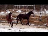 «милое создание это лошади » под музыку IOWA - Бьёт бит. Picrolla