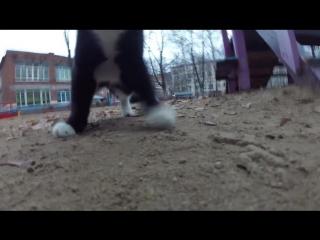 Психологический триллер Коты против квадрокоптера