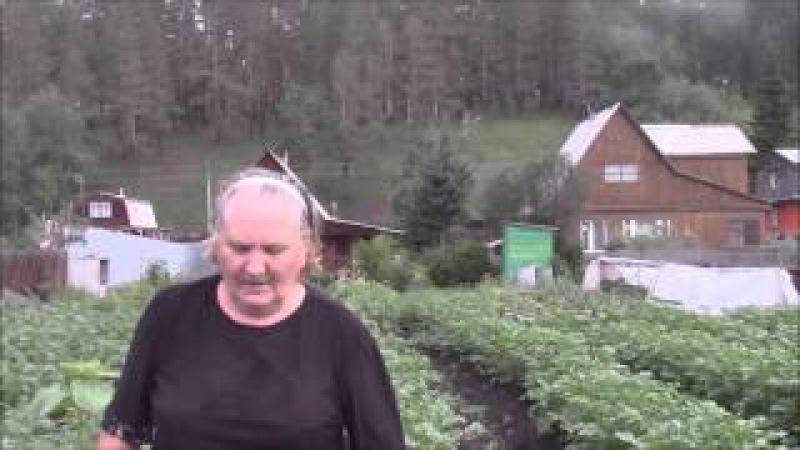 Картофель под гребни Григорова Людмила Борисовна