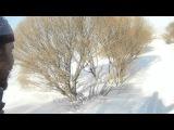 Хотьба на лыжах [wirruss] средь пышных кустов ивы