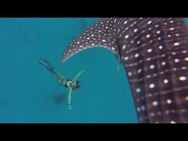 GoPro Awards: Ocean Ramsey and a Whale Shark (китовая акула)