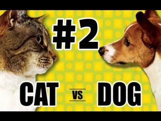 #2 КОШКИ ПРОТИВ СОБАК #2! CATS VS DOGS! ВЕЧНЫЙ СПОР КТО ЛУЧШЕ?
