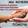 Помощь Бездомным Животным Воронежа.