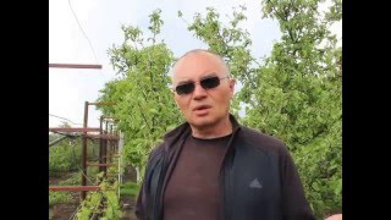 Обработка винограда от оидиума, милдью, клеща.