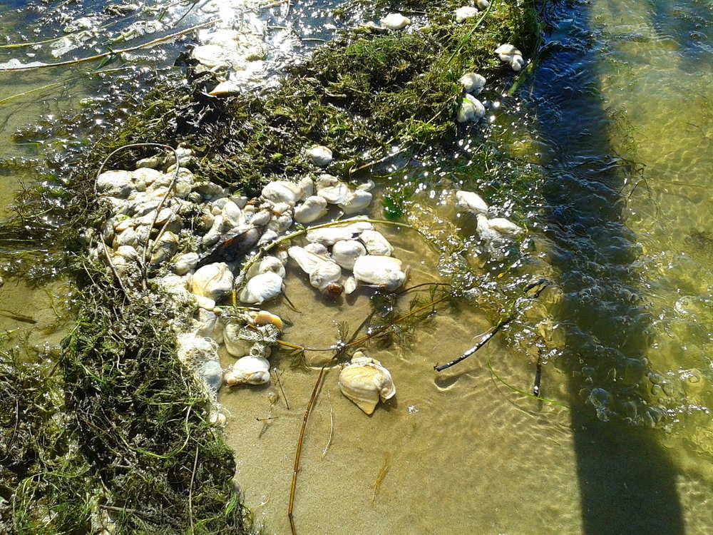 На Харьковщине гибнут моллюски (ФОТО)