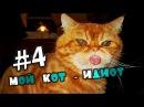 4 Мой кот - забавный идиот