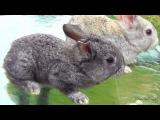 Крольчата милые трогательные няшки, классные добрые животные, миленькие смешные малыши