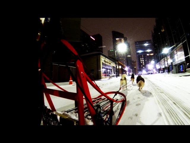 Downtown Pittsburgh Dog Sledding 2016