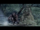 Племена - Жил был человек разумный - Homo sapiens (20015)