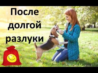 Собаки и коты приветствуют хозяев после долгой разлуки. Милые животные (сборник)