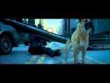 Dog fight scene - I am legend