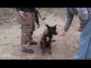Дрессировка собак, как отучить щенка брать корм у чужих людей