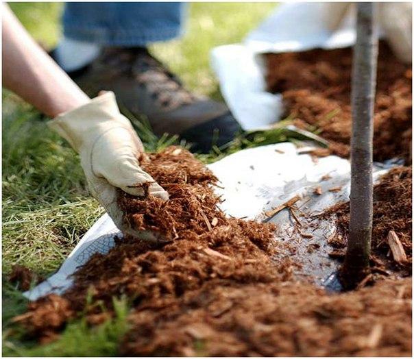 Земля, почва, мульча, мульчирование