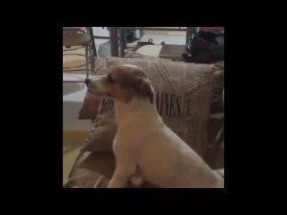 Реакция собаки на фильм ужасов