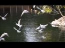 Голуби Джуманджи Животные в мегаполисе
