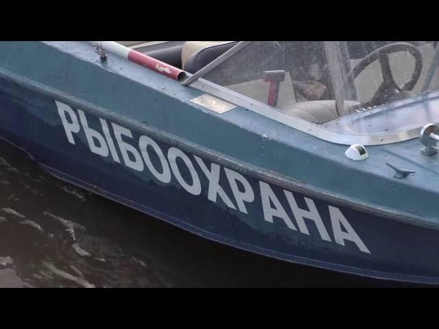 2016 06 17 HD Спецреп Рыбнадзор