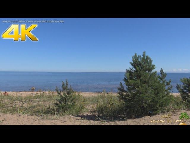 Красивый пляж Ладожское озеро Дикий песчаный пляж Ладоги Спокойная вода Beautiful bea...
