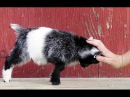 Cute And Funny Baby Goats Compilation || Crazy Baby Goat Playing and Jumping || YouTube