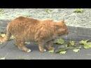 Песня про котика