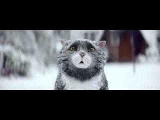 Прикольный новогодний ролик про кота