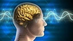 мозг не думает, а лишь ретранслирует мысли, приходящие извне.